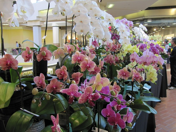 The third floor was home to many beautiful orchids.