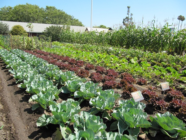 Centennial Farm includes many vegetables in its above-ground gardens.