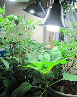 Indoor garden fluorescent lights