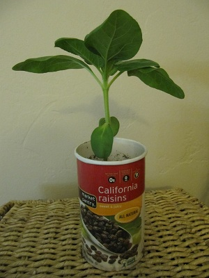 Recycled plant pot