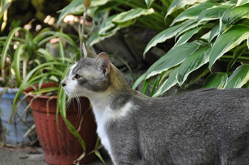 Gray cat in a container garden