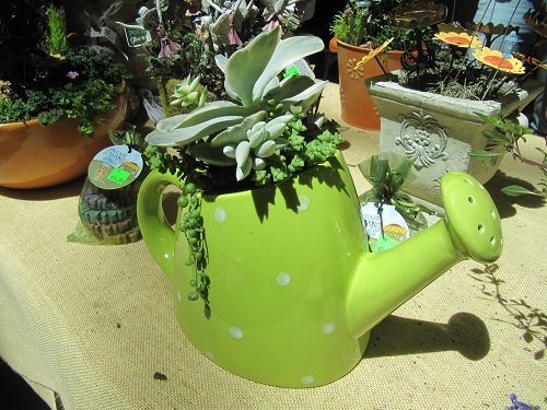Watering Can Plant Pot