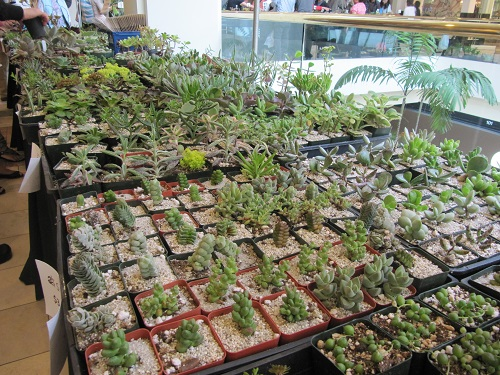 Succulent Plants on Table