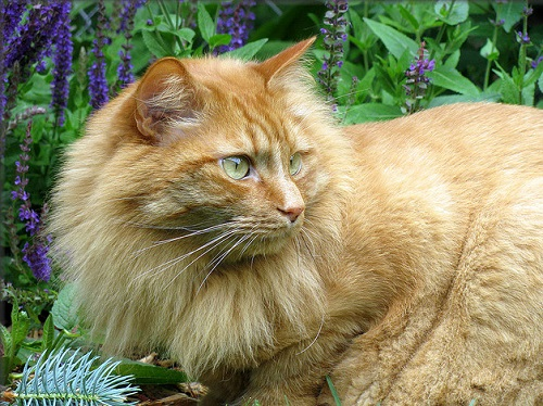 Big orange cat in a garden