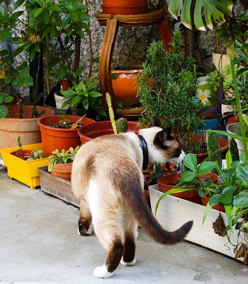 Cat sniffing a plant in a container garden