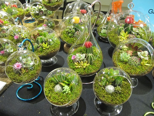Stylish hanging terrariums