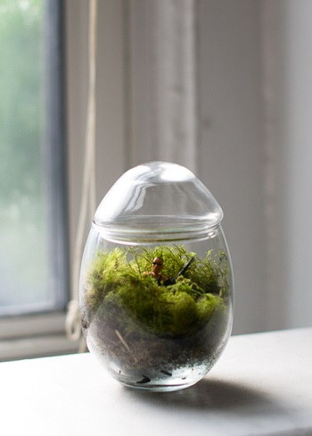 Terrarium on a windowsill with tiny man figurine