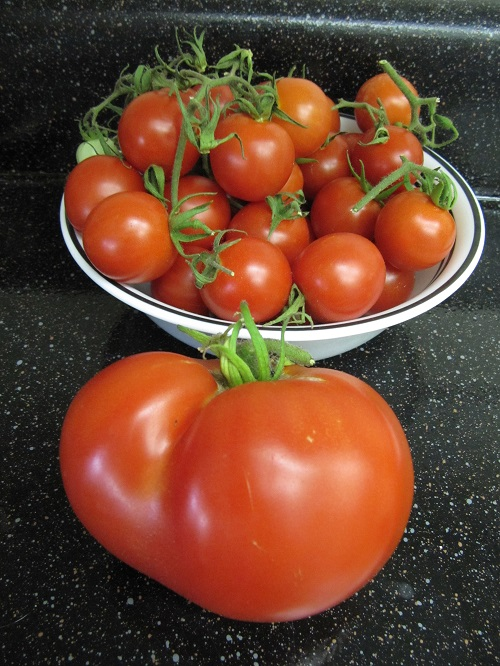 Cherry Tomatoes and Beefsteak Tomato