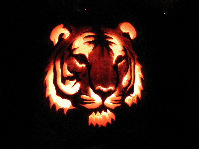 Jack O'Lantern Carved Pumpkin Tiger